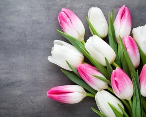 И пусть весь мир подождёт: поле с миллионами тюльпанов