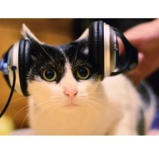 Создали специальную музыку для кошек